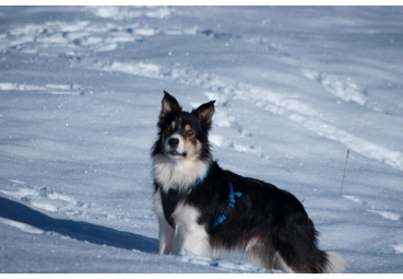 NEEWA - DOG HARNASS - SIZE XL